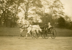 Yaquis and Yima driven by Homer Davenport in Central Park, NYC