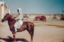Arabian, al Kharj, Arabia