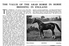 The Value of the Arab Horse in Horse Breeding in England