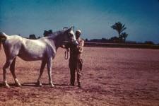 RAS Egypt Mare 17yr. Samha =. Sire - Bayad
