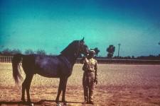 RAS Stallion 4yr. Gassir = The Daring One. Sire - Kheir; Dam - Badia