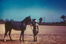 RAS Stallion coming 3 yr. Sahlan = Sire - Shaikal [Sheikh El Arab]; Dam - Medalela