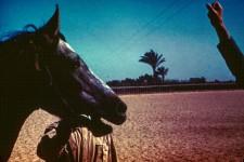 RAS Stallion Sahlan