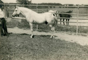 *Fadl August 1952 with Charles Craver, two mares