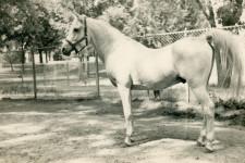 Fay-El-Dine, August 1952