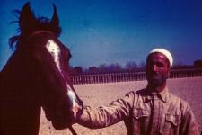 RAS Stallion Farid [or Faarid]