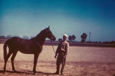 RAS Stallion coming 2yr. (Full). Faarid [Farid] = Single or Alone. Bay with black points, star and snip, highly prized color
