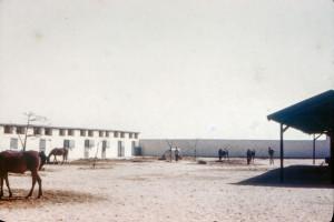 RAS Mares' Harem 1946