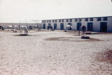 RAS Mares' Harem (Stalls and feed lot) c1946