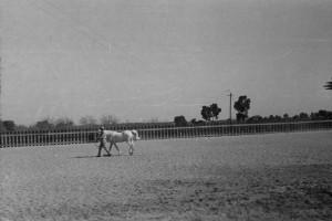 RAS Stallion Presentation, unlabeled, 1940s