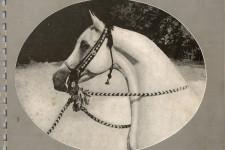 1937 Selby Stud Brochure of Arabian Horses, reprint