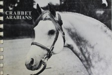 Crabbet Arabians, stud photo album, 1982