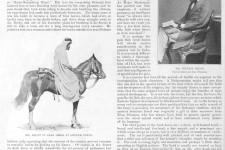 Arab Horses in England, the Sketch